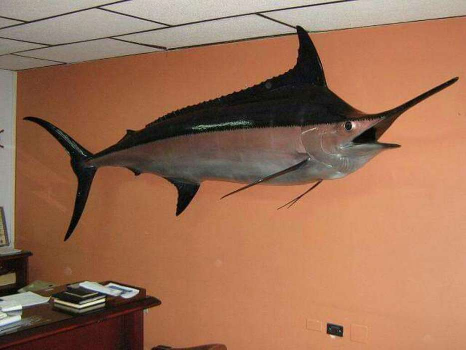 Marlin Azul Grande Sala 3.80 Mt Pared