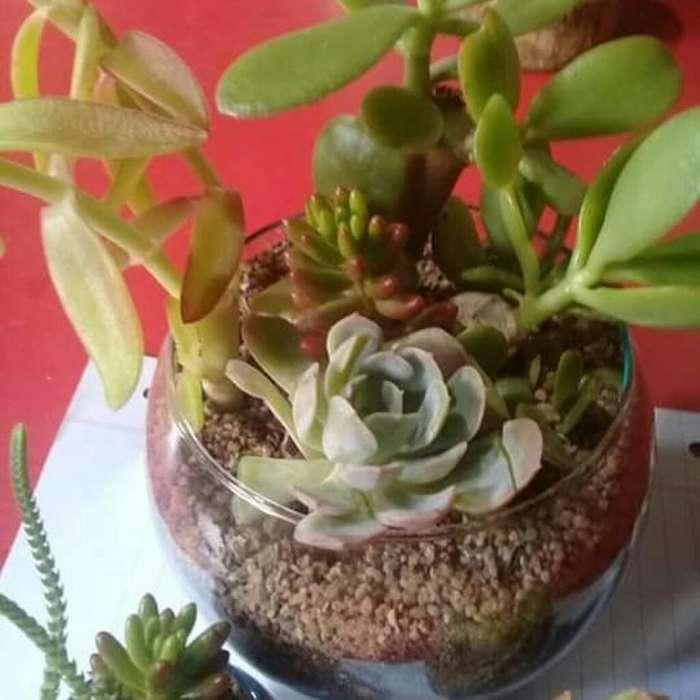 Plantas Adornos Mini Jardin