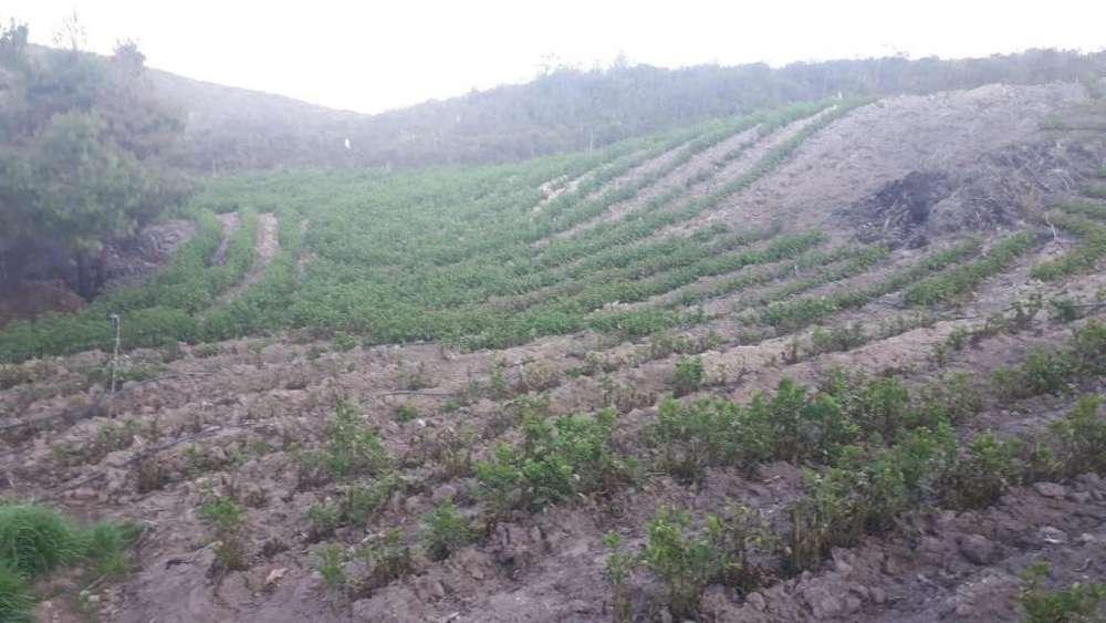 En Venta Terreno de 4 Hectareas, Vía a Loja, Puca Chico