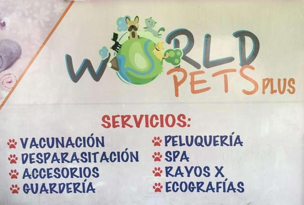 World Pets Plus