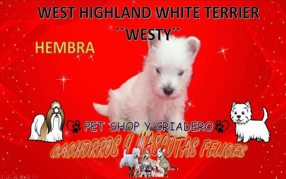 CRIADERO VENDE CACHORROS West Highland White <strong>terrier</strong>VENDOwesty, PARA TODO EL PAIS.