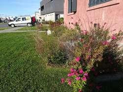Mantenimiento de Parques Y Jardines