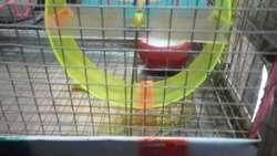 Jaula de Hamster 35 Cm Largo
