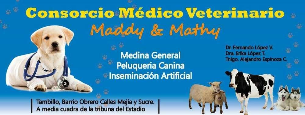 Medico <strong>veterinario</strong> a Domicilio