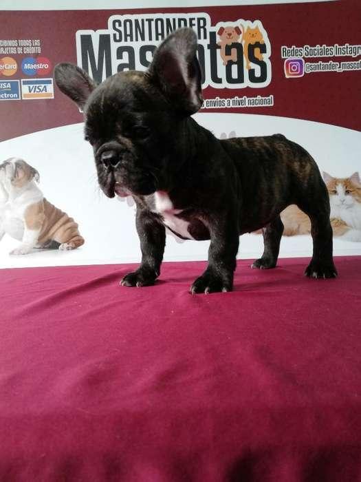 Bulldog Francés Foticos Originales de El