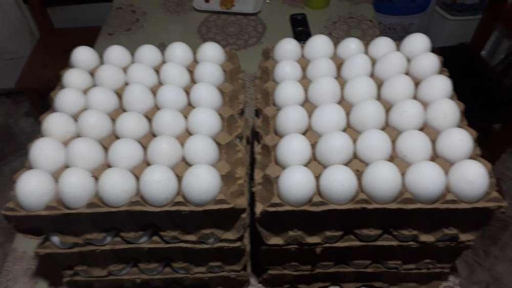 Venta de Huevos por Mayor Y Menor