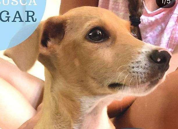 Busco Adoptar Perro Raza Pequeña sinpelo