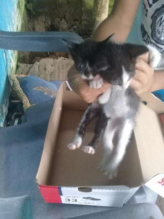 Doy en Adopcion Estos Dos Gatitos