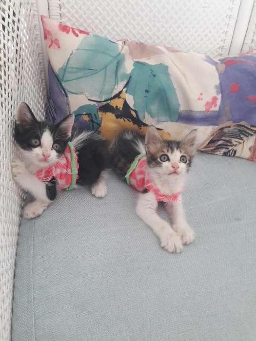 <strong>gatito</strong>s Rescatados para Adopcion