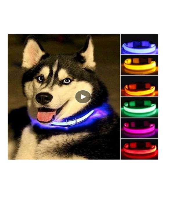 Collar De Nailon Led Para Perro, Seguridad Nocturna