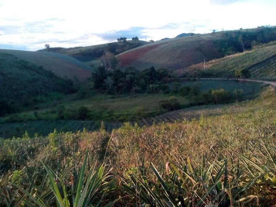 Se vende terreno zona agricola 5 Hectareas
