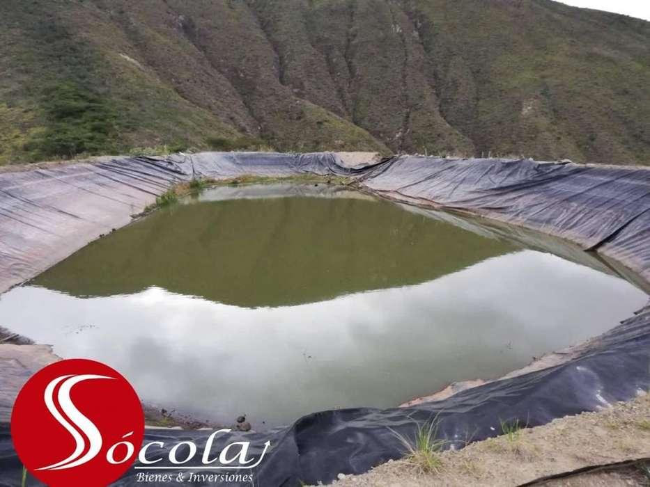 Venta de 11 Hectáreas de Terreno con aguacate en San Vicente de Pusir