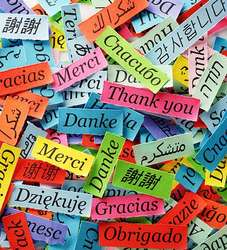 Traductora Inglés , Alemán al Español