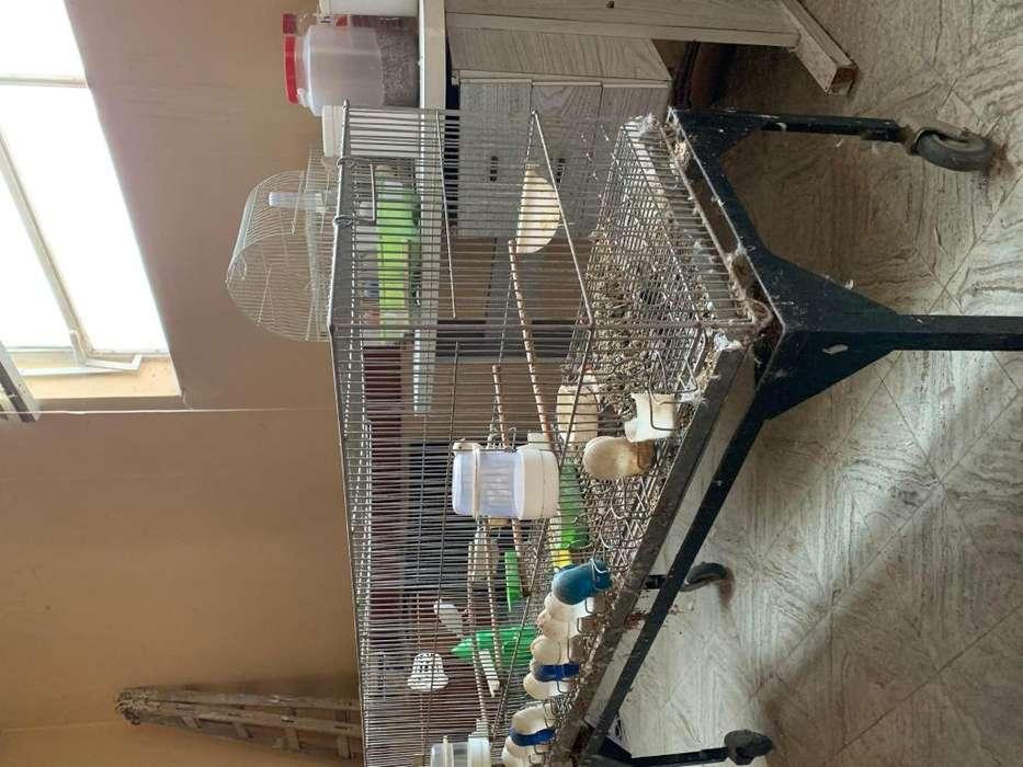 Vendo: jaulas de cría canarios y voladora de 0,80 x 1,20