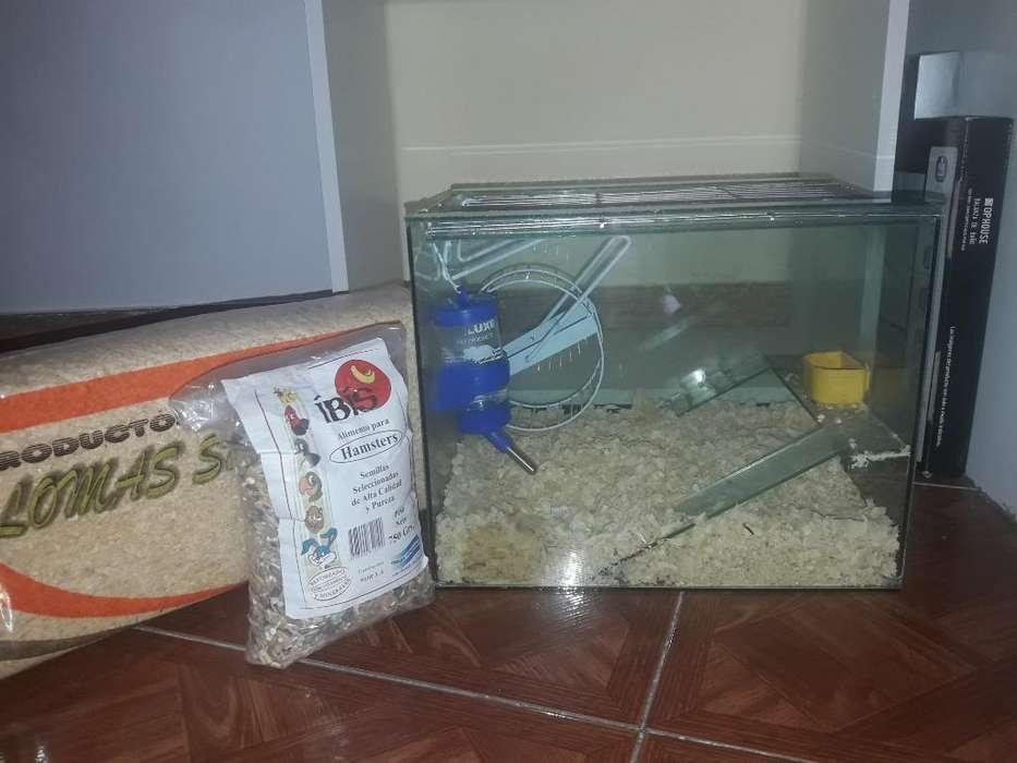 Combo Pecera Hamstera Y Accesorios