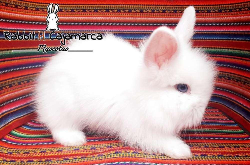 Conejos Mascota en Cajamarca