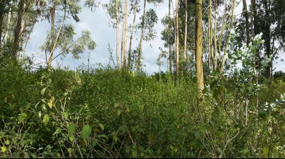 Terreno en Venta Sector Tumbaco