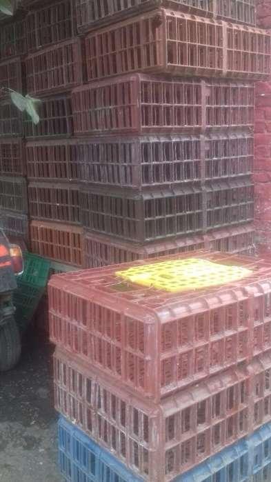 Guacal de Pollo 3147638397