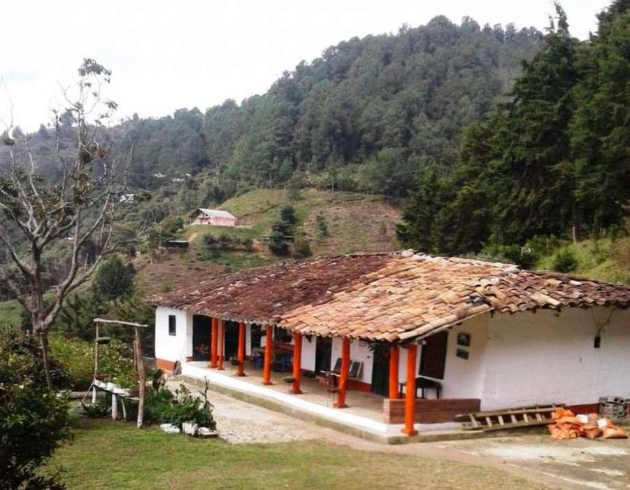 FINCA EN 3 LOTES, COPACABANA (Sector GUARNE – Sector SANTA ELENA)