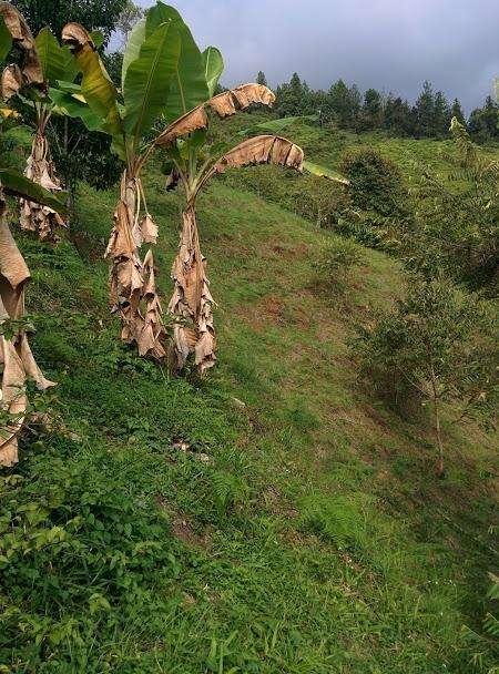 Finca vereda la Ceiba Rionegro