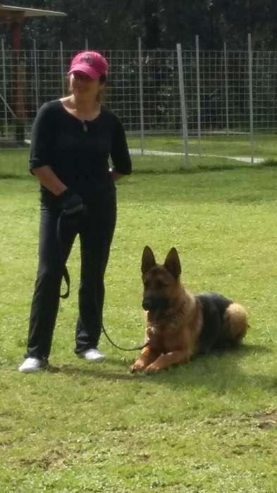 Psicologia. Educador Canino