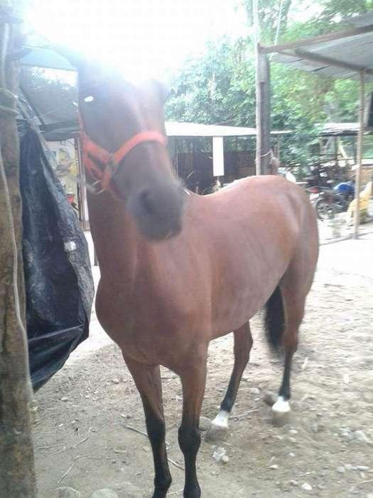 Alquiler de <strong>caballo</strong>s