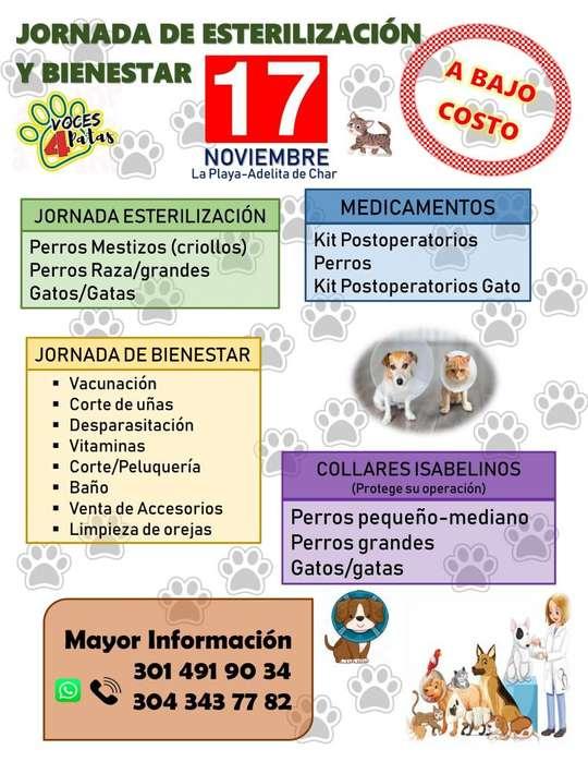 Jornada de Esterilización y Bienestar animal a BAJO COSTO