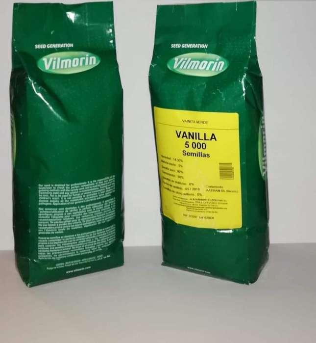Vainita Verde