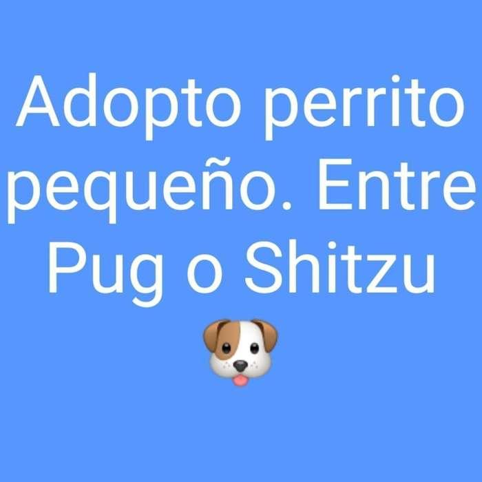 Adopto Perro de Raza Pequeña.