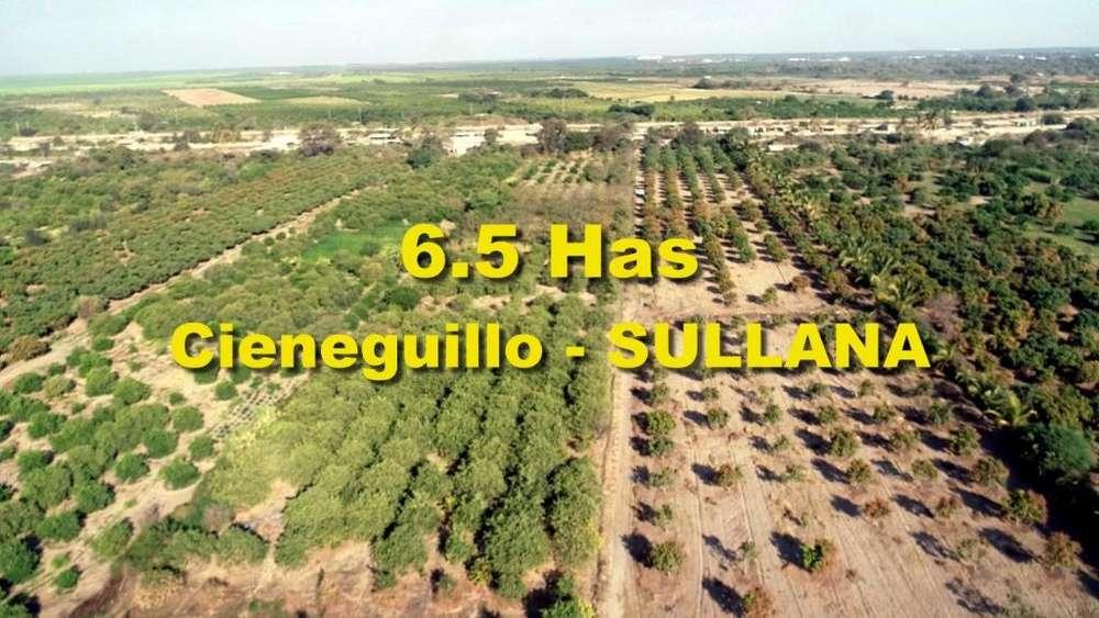 Vendo terreno agrícola de 65,000 m2 en Cieneguillo en SULLANA