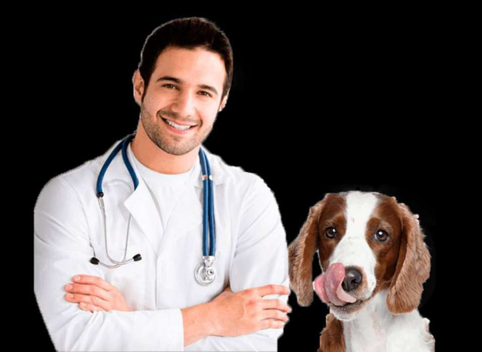 Se Busca <strong>veterinario</strong> Colegiado C/s Exp