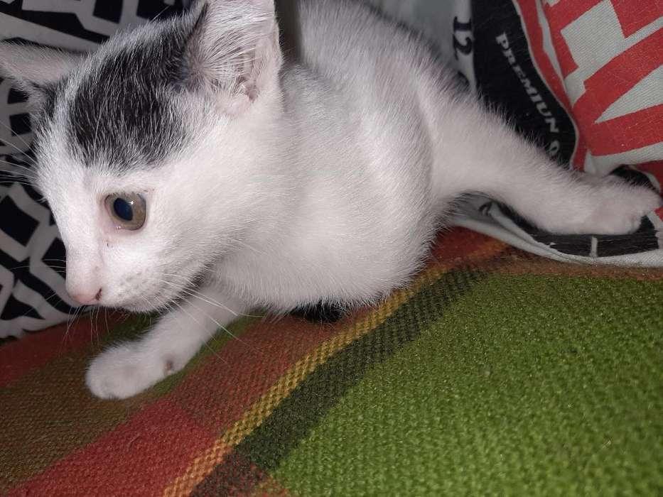 Doy en Adopción Gatito