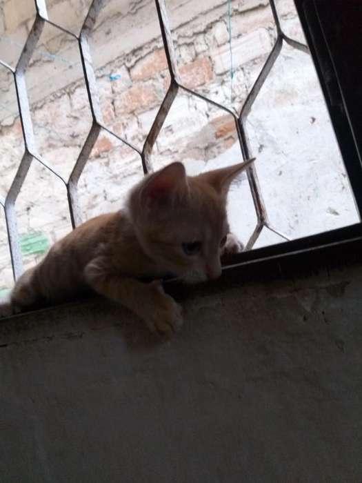 Regalo <strong>gato</strong>s