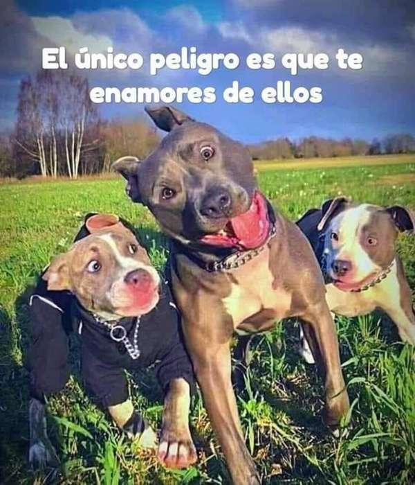 Paseos Caninos Todo Servicio Oferta
