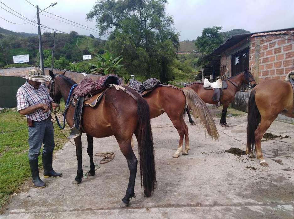 Renta de Caballos en Concepción Antioqui