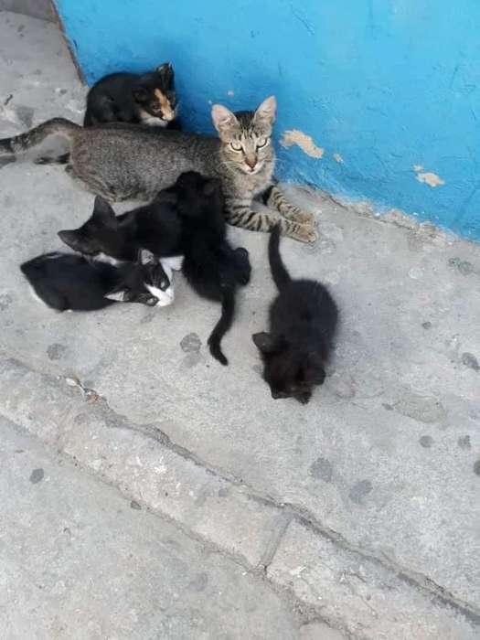 en Adopción Gaticos de 40 Dias