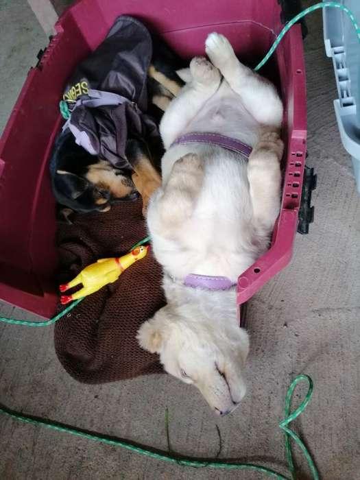 Servicio de Paseo Y Cuidado de Mascotas