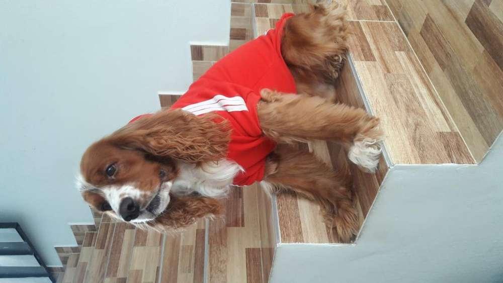 Busos Adidog para Mascotas