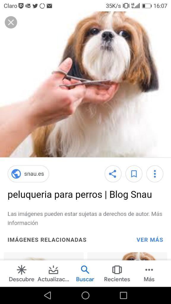 Se Necesita Peluquero Canino