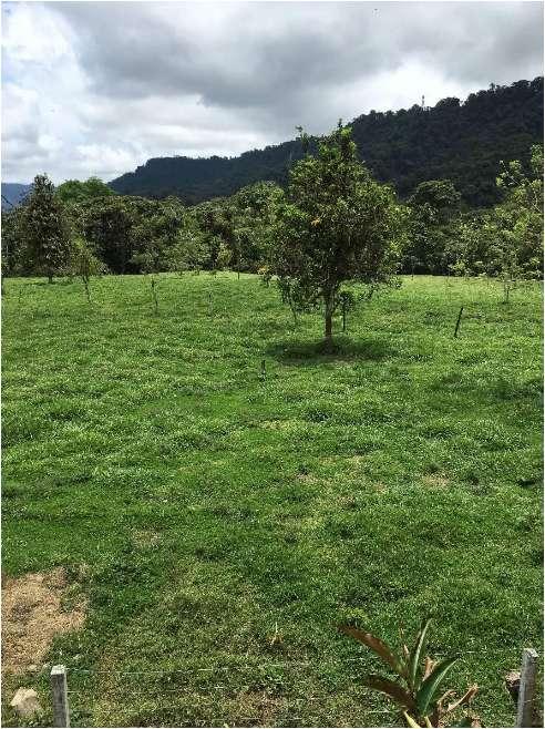 Vendo Hacienda 178 Has en Los Bancos Apta Para Ganadería y Ecoturismo, Pichincha