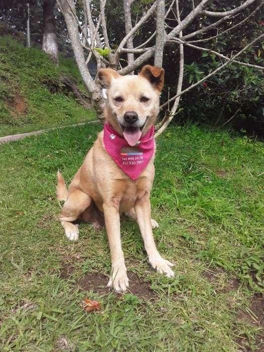 Olga <strong>perra</strong> en Adopción