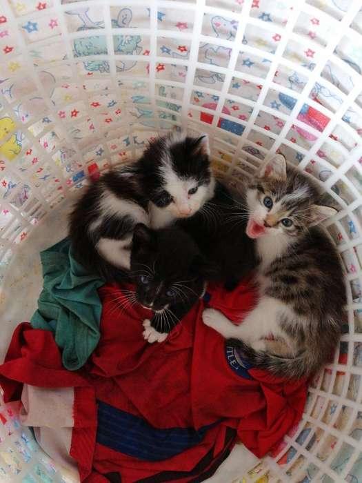 Lindos Gatos en Adoccion