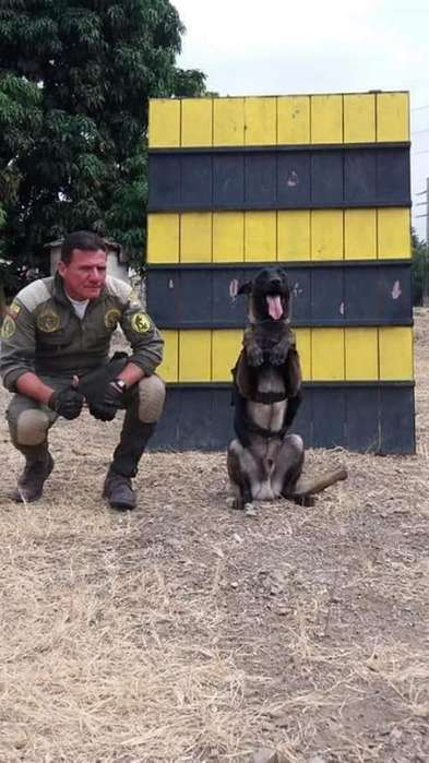 Perros Elites <strong>adiestramiento</strong> Canino