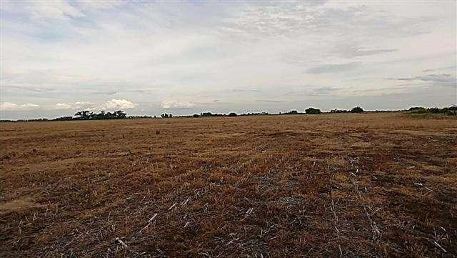 105 has agrícolas de campo en Lobos