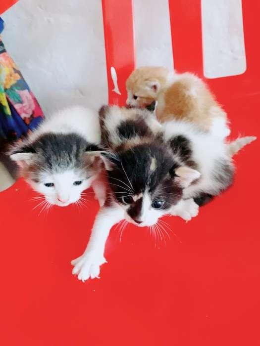 Doy en Adopcion Lindo Gaticos