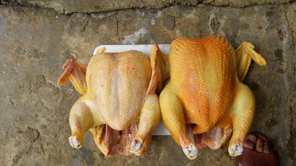 <strong>pollos</strong> de Engorde