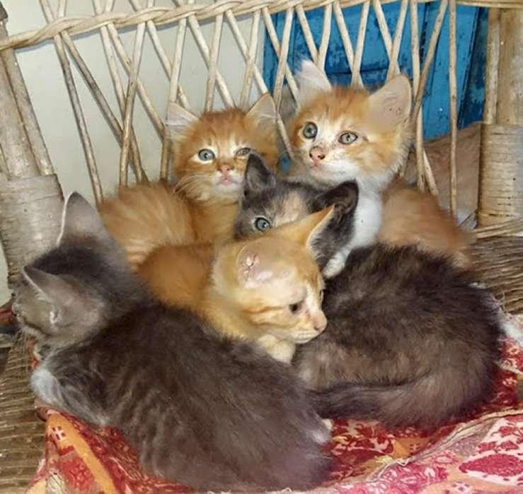 <strong>gatito</strong>s en Adopcion , Se Regalan