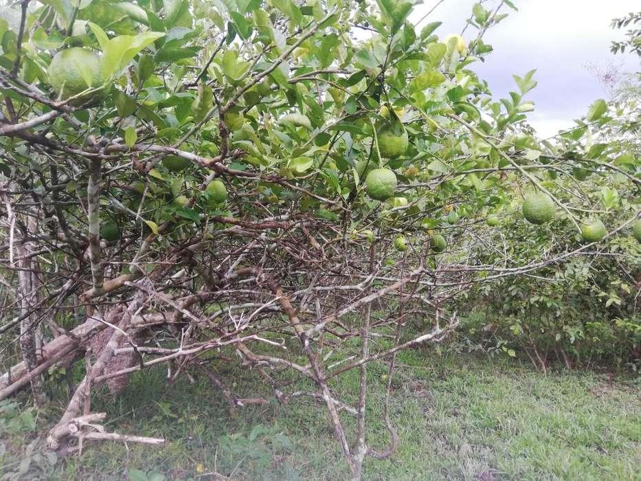 Vento fundo de 13 hectareas a dos horas y media de Tarapoto