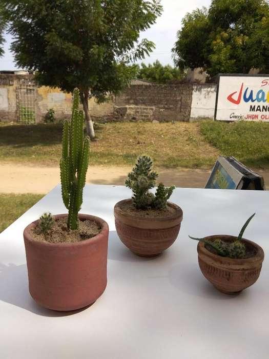 Venta de Cactus desde 15 Mil Pesos