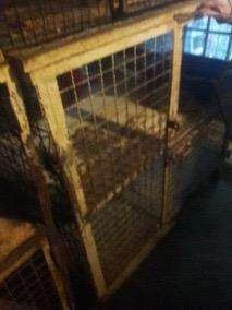 Jaulones para Gatos, Conejos Y Perros